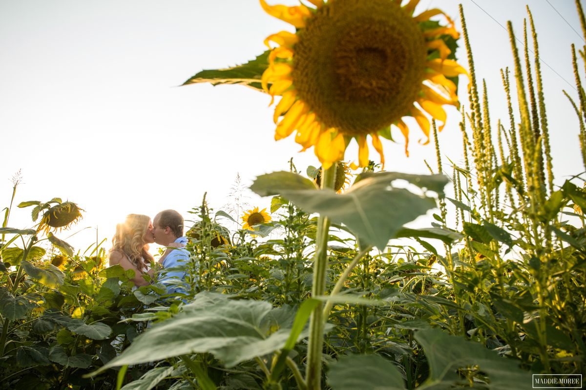 memphis engagement sunflowers maddie moree